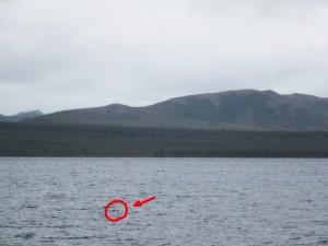 Рог на озере Лабынкыр