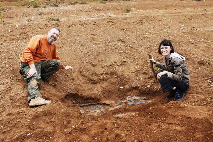 Раскоп с динозавром