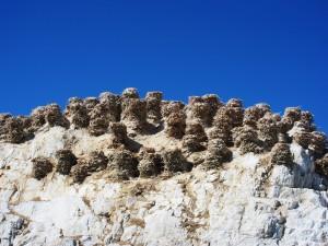 Гнезда на скалах Хяргас Нуура