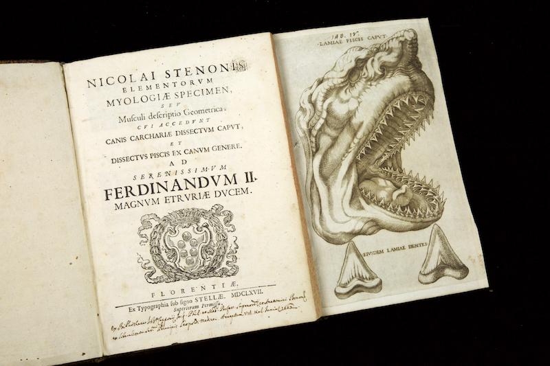 Steno-1667-30
