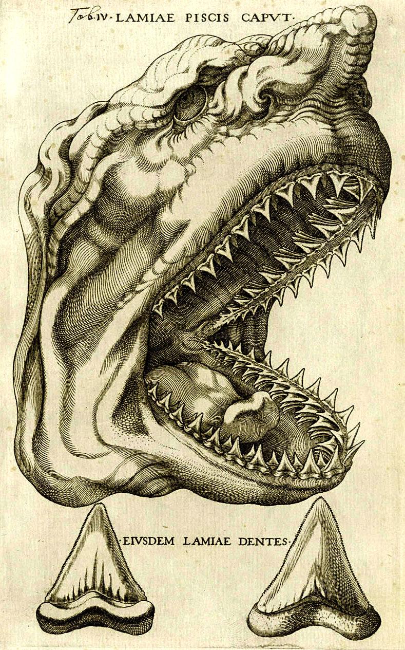 steno_shark1