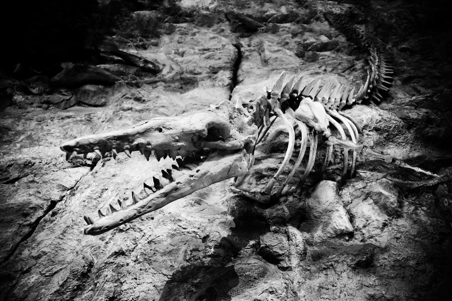 black-and-white-photography-animal-darkness-predator-reptile-1152799-pxhere.com
